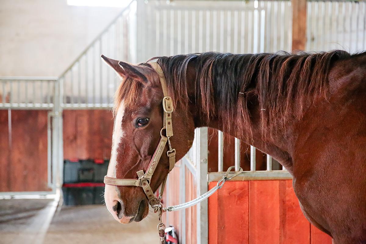 Großzügige Boxen für Ihr Pferd