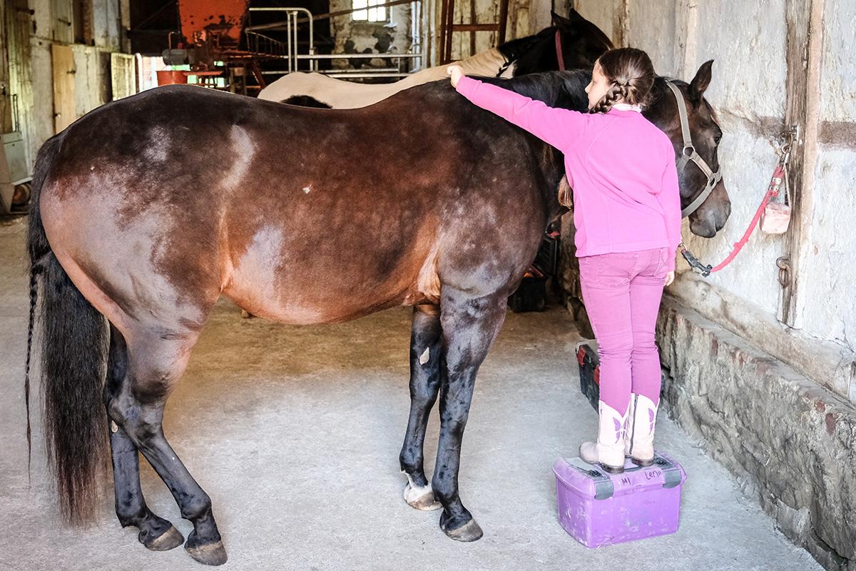 Pflege der Pferde